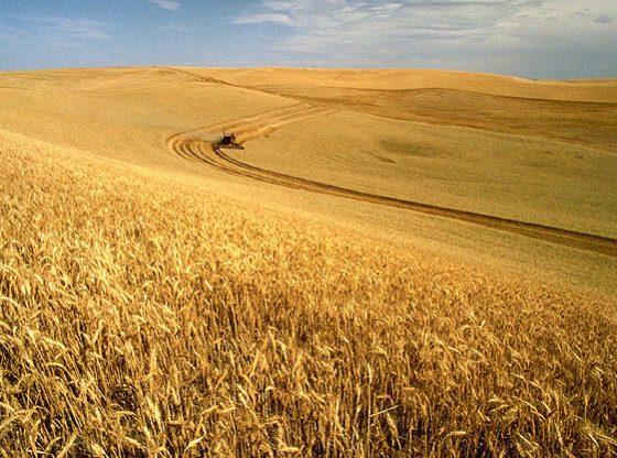 Weizenernte in Idaho- Foto © unbekannt - ars.usda.gov - Image Number K1441-5, Public Domain, commons.wikimedia.org