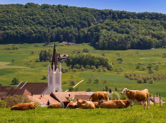 Dorf mit Kühen ( Bedanke Dich beim Bildautor Eine Quellenangabe ist nicht erforderlich, jedoch wird eine freiwillige Angabe sehr geschätzt. Du kannst den folgenden Text dazu nutzen: Bild von adege auf Pixabay)